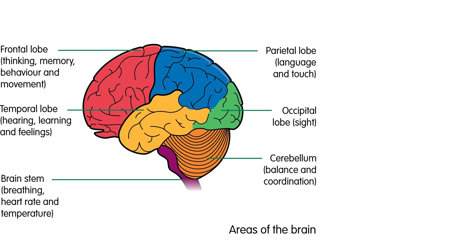 where in the brain can the tumour be?
